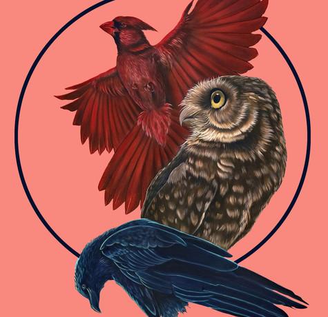 Bird Kin