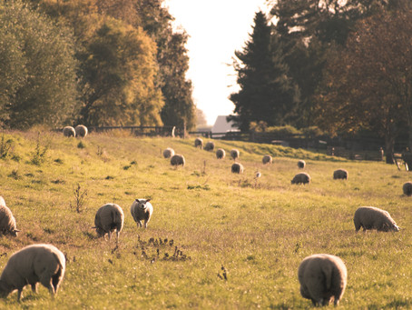 What is regenerative grazing?