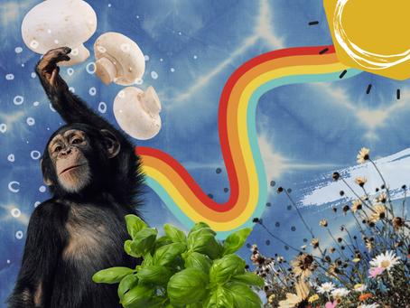 Half baked food theories