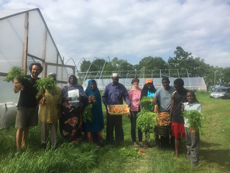 Black owned green business profile series #2: New Roots Cooperative Farm