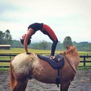 horse-yoga.jpg