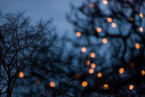 dark-fairy-lights-fairylights-lights-nig