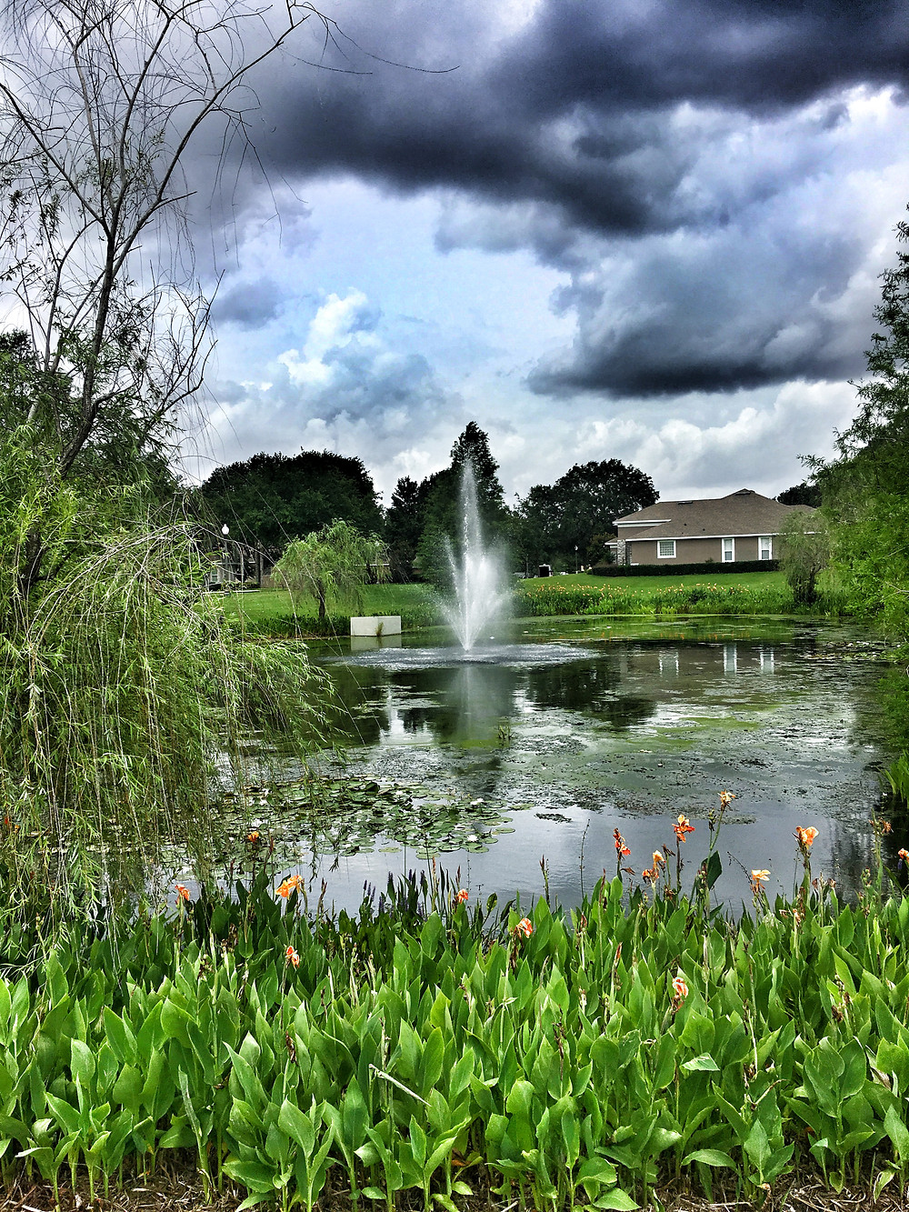 Healthy Lake, Happy Fountain