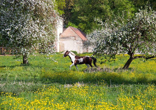 Blühende Wiesen und Bäume