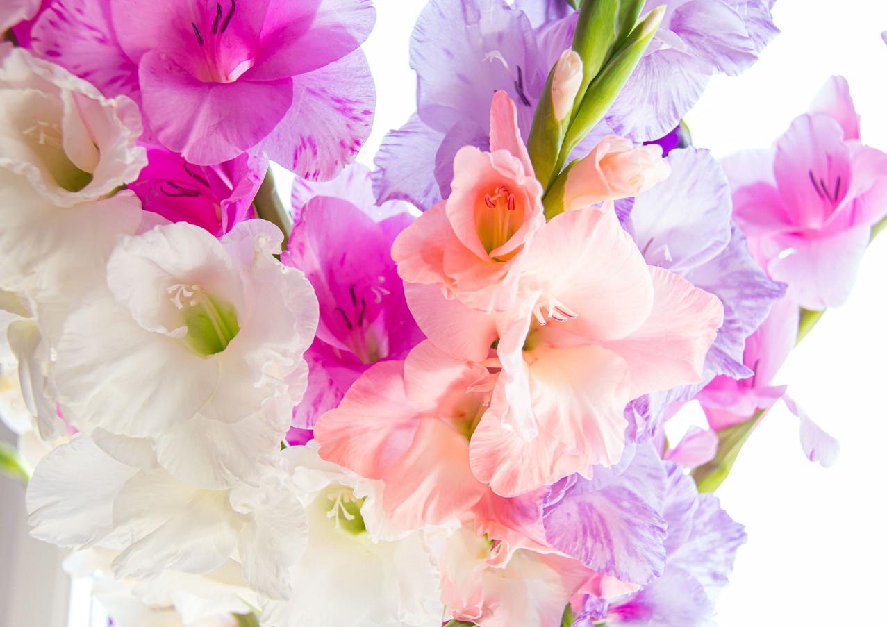 Blumenstrauß aus pastellfarbenen Gladiolen