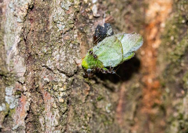 Fleißige Ameisen