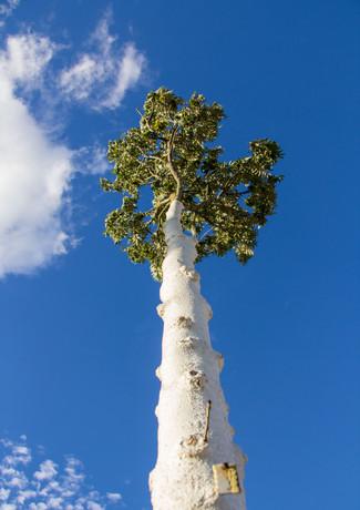 Wolkenformationen und ein großer Baum