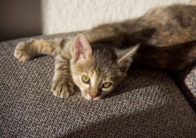 Kätzchen zum Verlieben