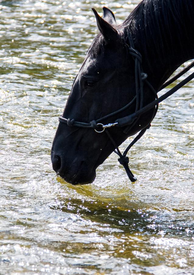 Pferd trinkt im Fluss