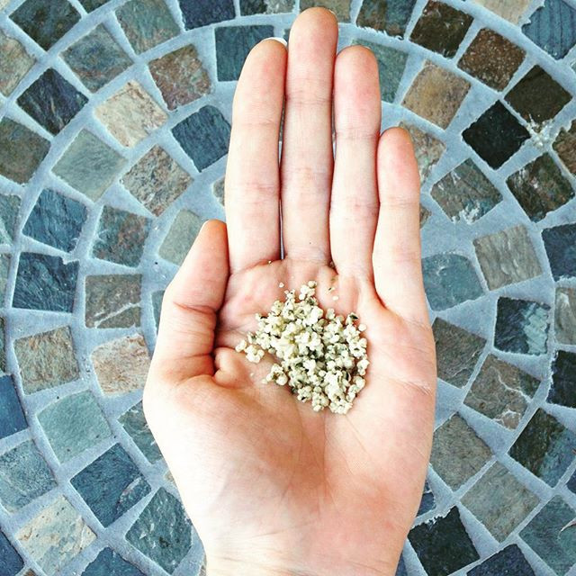 Hemp Seeds in someone's hand