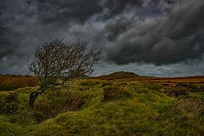 Bodmin Moor Windswept Tree Lee Thornberr