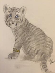 Daniel the Striped Tiger