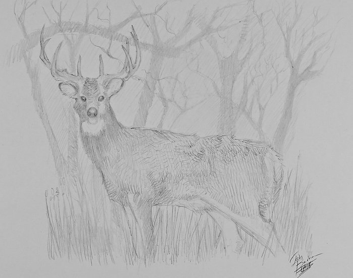 White-tailed Deer (Original)