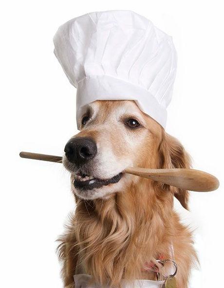 Cachorro segurando colher de pau com a boca.
