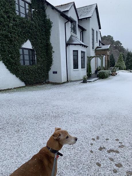 Dog friendly hotel on loch ness