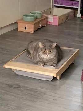 s size with gray cat 2.jpg