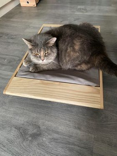 s size with gray cat.jpg