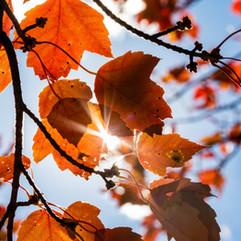 Backyard Foliage