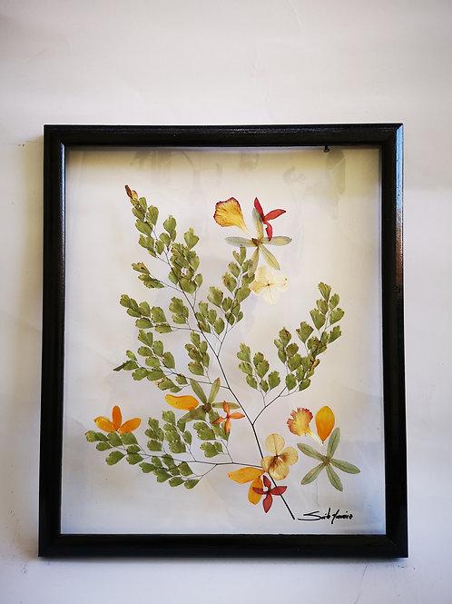 Cuadro 11x13 pul, helecho, flores y hojas naturales secadas y preservadas