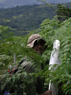 Butterfly Hunter in Ferns.jpg