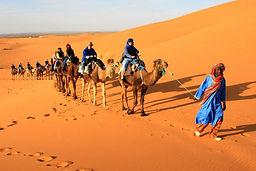 tour around  desert  by  camels trekking