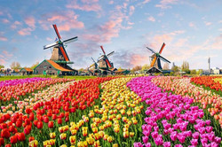 Netherlands-Windmills-and-Tulips-e149283