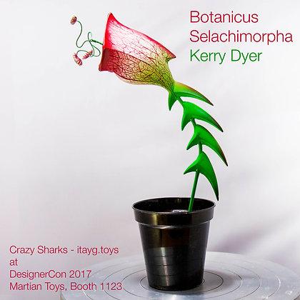 Botanicus Selachimorpha
