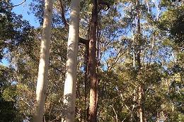 TallTrees.jpg