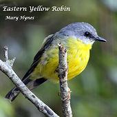 Eastern Yellow Robyn small.jpg