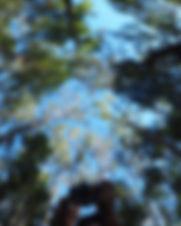 reflective hemisphere.JPG.jpg