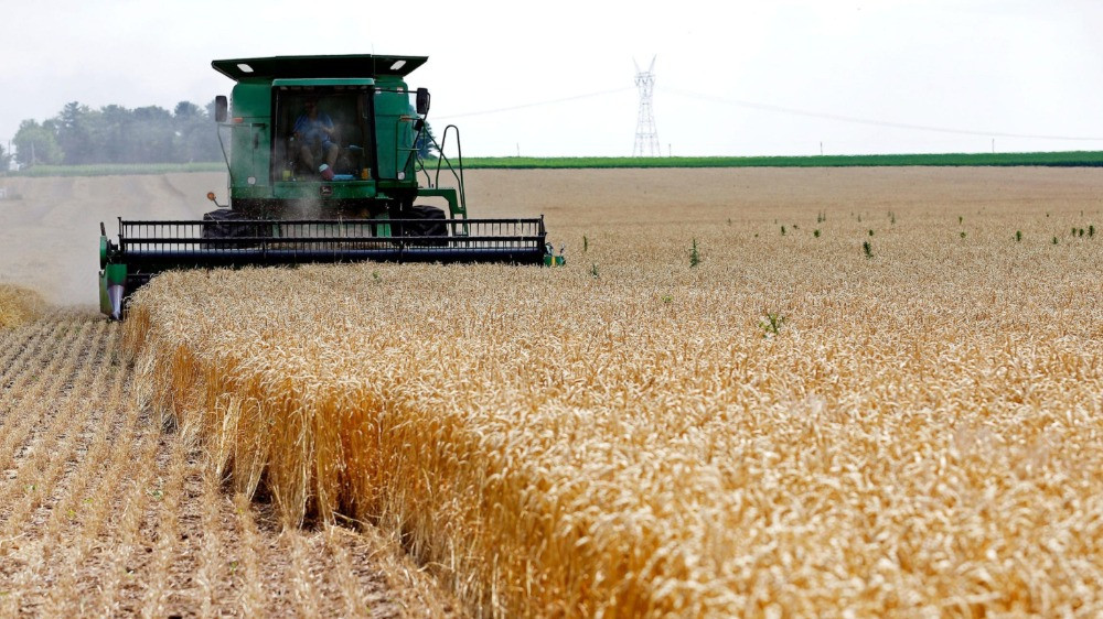 A combine drives over stalks of soft red winter wheat during the harvest on a farm in Dixon, Illinois