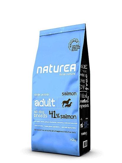 נטוראה סלמון בוגר מזון לכלבים ללא דגנים