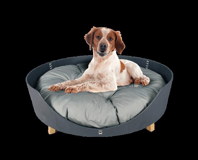 מיטת סוויטה לכלב