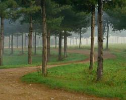 Sentiero tra gli alberi