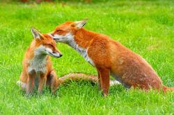 Fauna Parco del Roccolo
