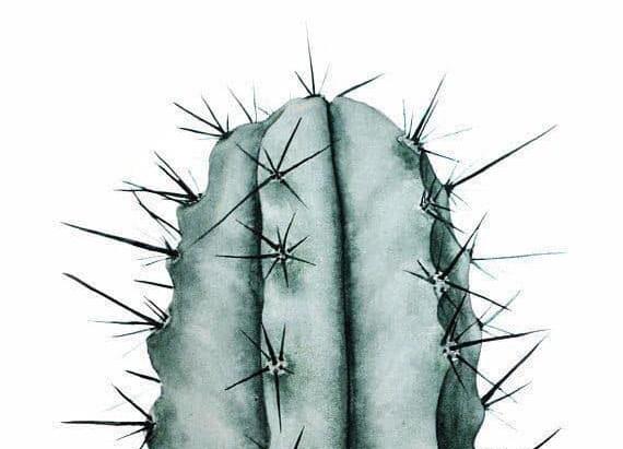 L'histoire du Cactus