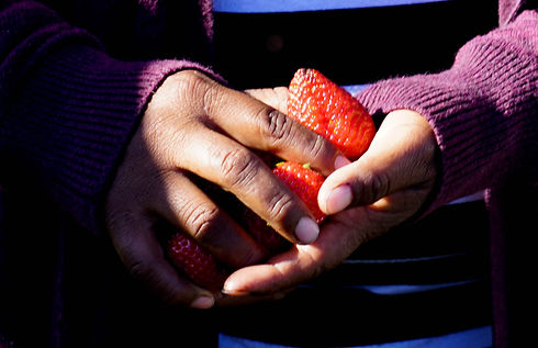 Farmworker Reality Tour Strawberries