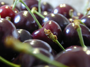 cherries picked ready to eat
