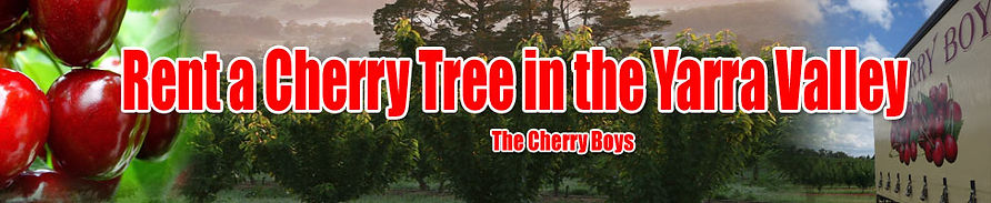 Rent a Cherry tree for your own U-pick cherries