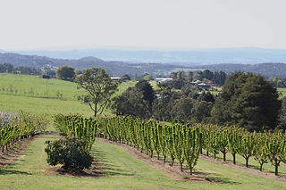 views of the Yarra Valley from the Cherry Orchard