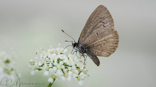 Moth Friend.jpg