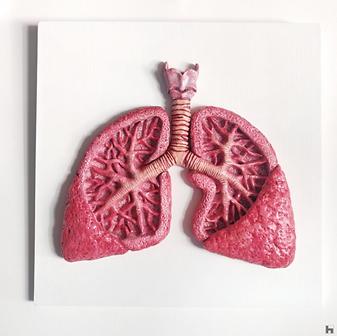 Human Lungs - White Frame - Pink