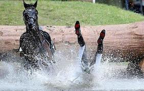 cheval.jpeg