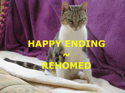 Tia Cat Rehomed