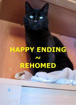 Jasper Rehomed