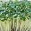 Thumbnail: Mushroom and Microgreen Sampler from Boise Vertical Farm