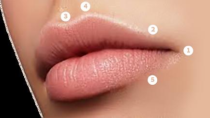 שפתיים-מושלמות