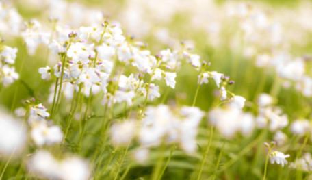 Frühling in unserem Garten