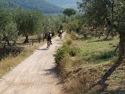 La via degli Olivi
