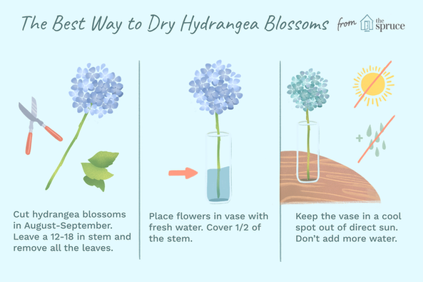 The Best Way to Dry Hydrangea Blossoms
